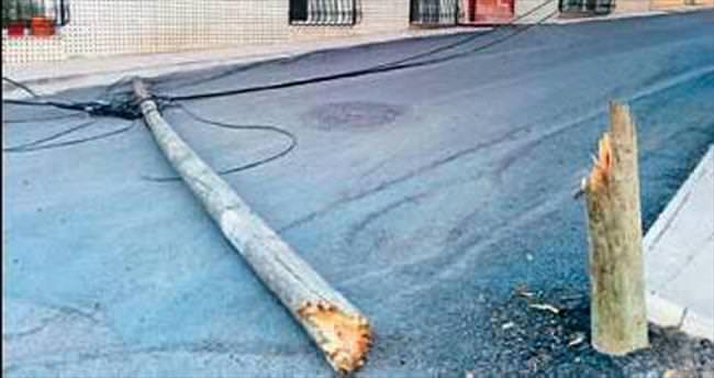 Ağaç telefon direği yol ortasına devrildi