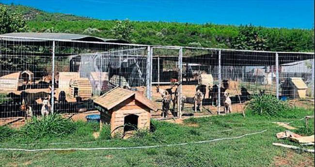 Hayvan barınağı kapasitesini aştı