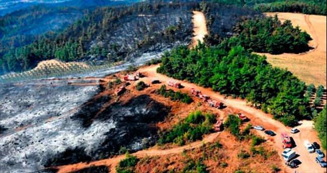 Bursa'da 50 hektar orman kül oldu