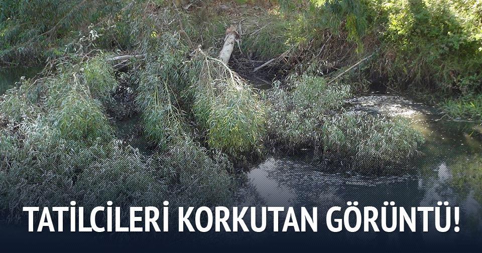 Mersin'de binlerce balık telef oldu