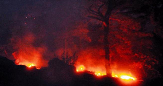 65 hektar kızılçam kül oldu