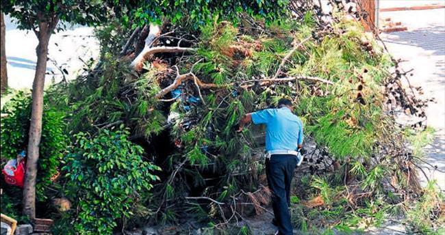 Devrilen çam ağacı aracı hurdaya çevirdi