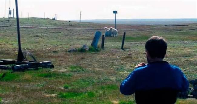 Kutup ayıları bilimsel araştırmayı engelledi