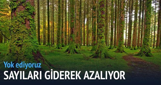 Her yıl 15 milyar ağaç yok ediliyor