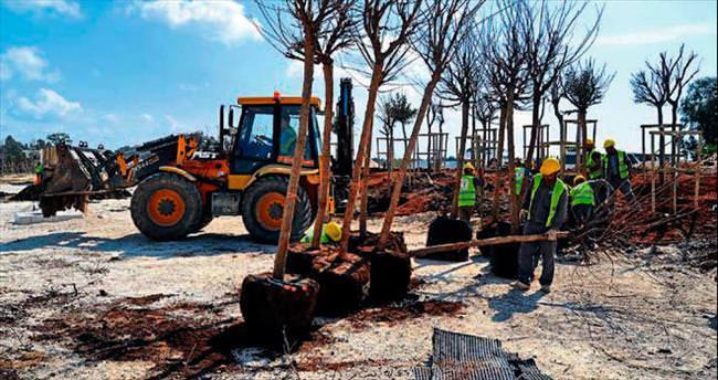 EXPO'ya Türkiye Ormanı talimatı