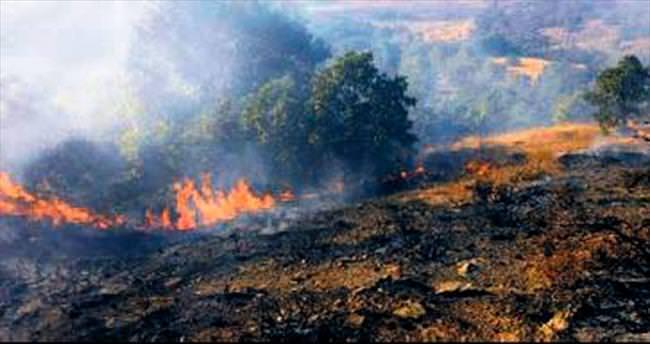 Çubuk'taki yangın 40 dönümü kül etti