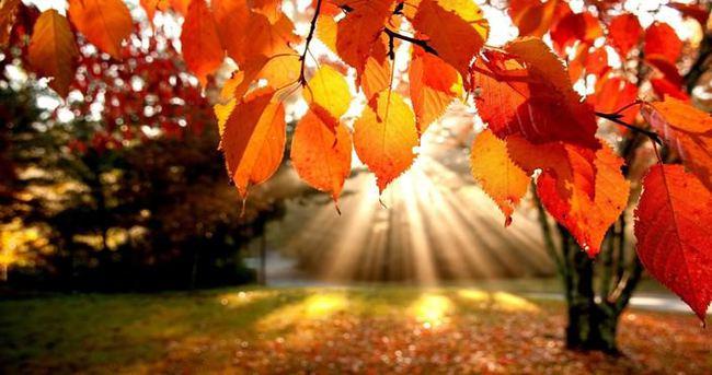 Sağlıklı bir sonbahar için