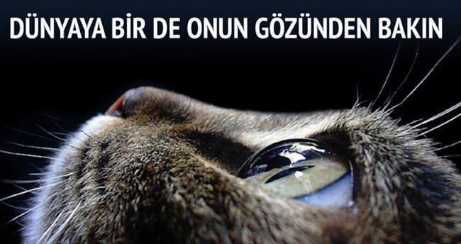 Dünyayı kedi gözleriyle görün