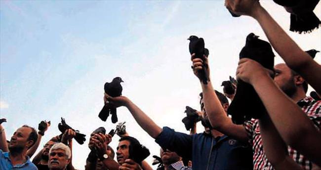 Barış için siyah güvercin