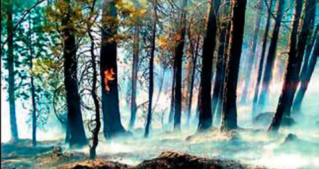 Sarıkamış'ta 4 hektar orman yandı