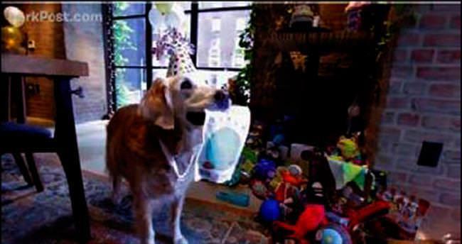 11 Eylül'ün kahraman köpeği