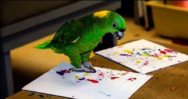 Hayvanların yaptığı resimler satışa çıktı