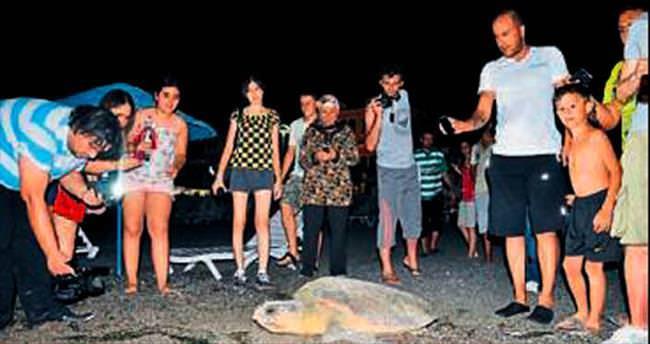 2 bin yavru caretta denizle buluştu