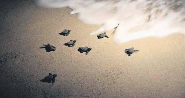 2 bin 200 yavru denize kavuştu