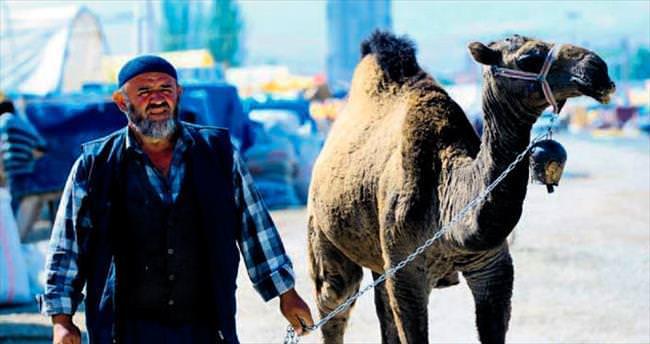 10 bin TL'ye kurbanlık deve
