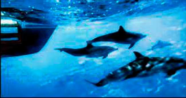 ABD balinalar için radarları azaltıyor
