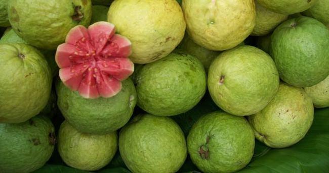 'Guava' kansere karşı koruyor