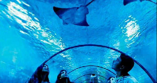 1 milyon kişi okyanusu keşfetti