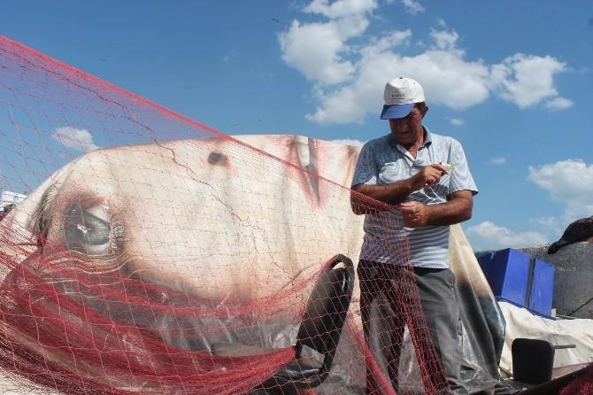 Balıkçıların Başı Yunuslarla Dertte