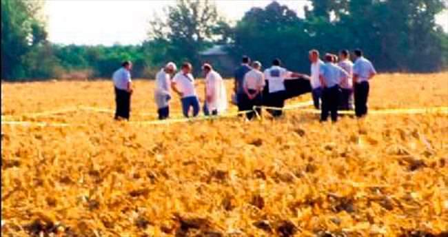 Mısır tarlasında hasat cinayeti