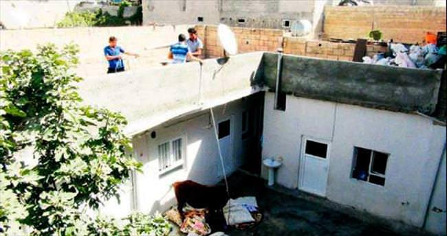Eve dalan boğaya çatıdan müdahale
