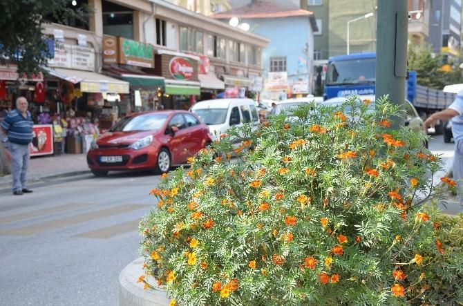 Orta Refüjde Büyüyen Çiçekler Sürücülere Zor Anlar Yaşatıyor