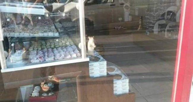 Fare giren dükkandaki tüm ürünler imha edildi!