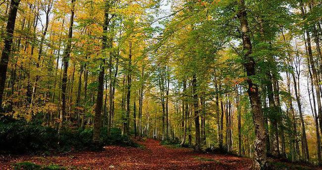 'Türkiye'nin iğne ve geniş yapraklı ağaç kaybı yüzde 18'e geriledi'