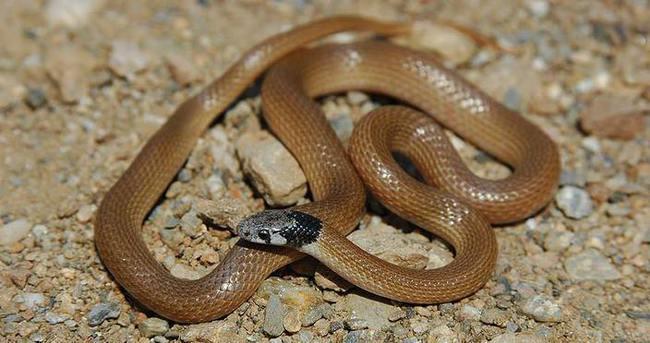 Türk bilim adamları yeni yılan cinsi buldu