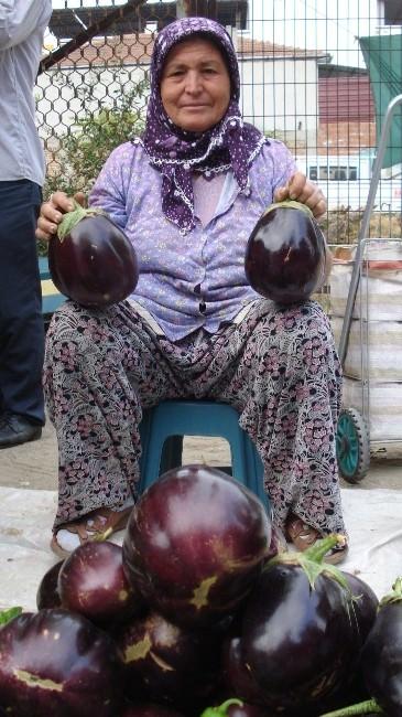 Devasa Patlıcanlar İlgi Odağı Oldu