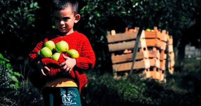 Elma üreticisinin yüzü güldü