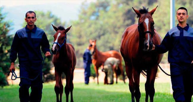 Gemlik atlarına coğrafi işaret geldi