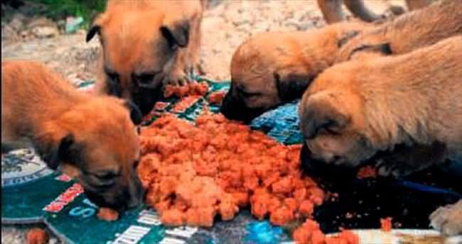 Manisa'da sokak hayvanı alarmı