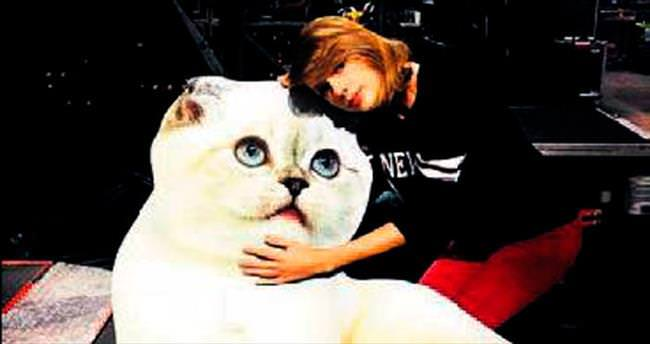 Kedilerine olan özlemini giderdi