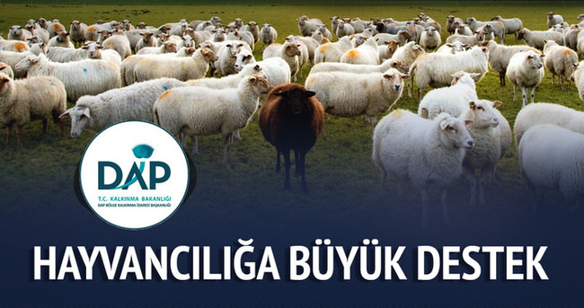 DAP Bölge Kalkınma İdaresi'nden hayvancılığa büyük destek