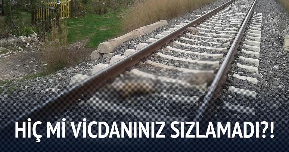 Kütahya'da hayvan katliamı