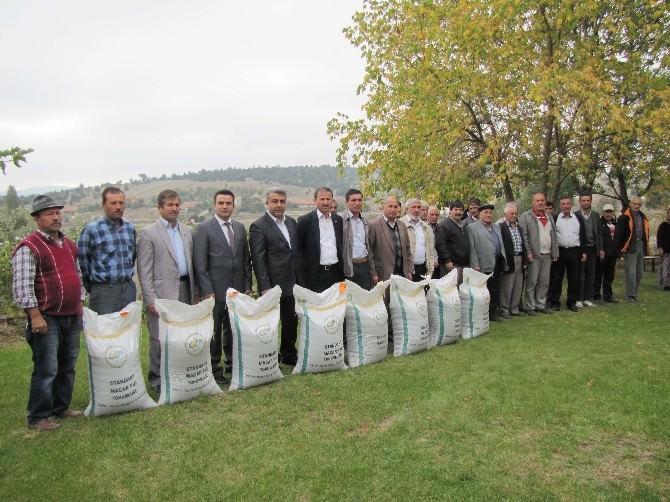 Hisarcık'ta 34 Çiftçiye Ücretsiz Macar Fiği Dağıtıldı