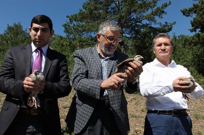 İnönü'de Doğaya Bin Keklik Salındı