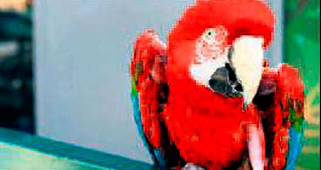 En yaşlı papağan 90'a bastı