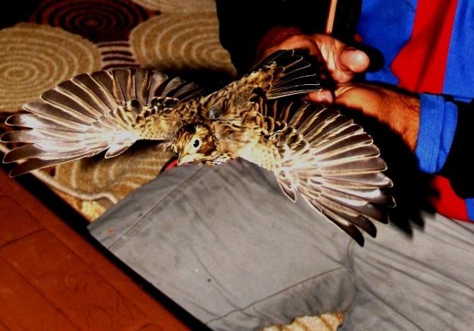 (Özel Haber) Aras Kuş Cenneti Misafirlerini Ağırlıyor