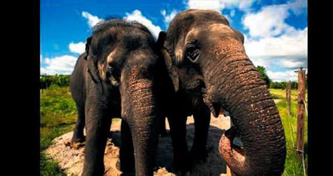 Sirkten emekli fillere huzurevi