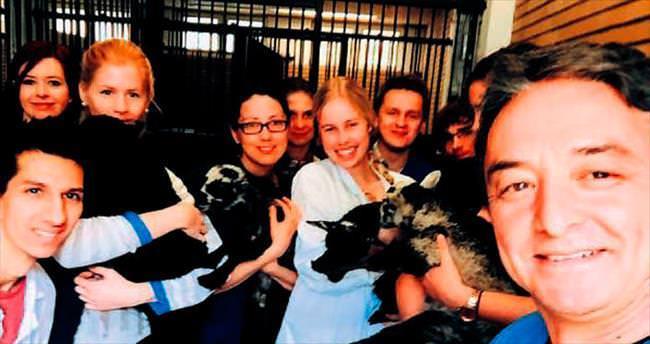 Dekanlık yarışına Ankara hayvanları damga vurdu