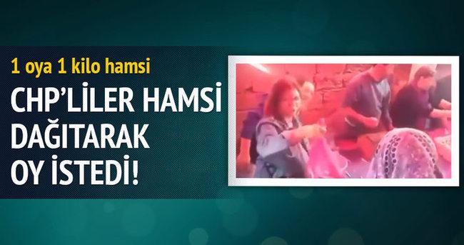 CHP'liler Trabzon'da hamsi dağıtarak oy istedi