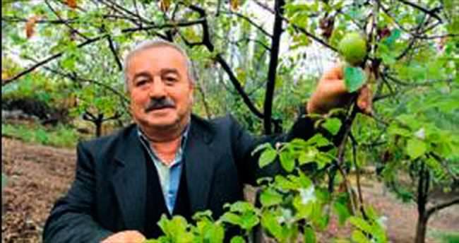 Stres elma ağacına erken çiçek açtırdı