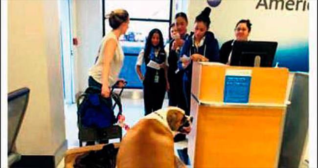 Obez köpek Hank birinci sınıfta uçtu