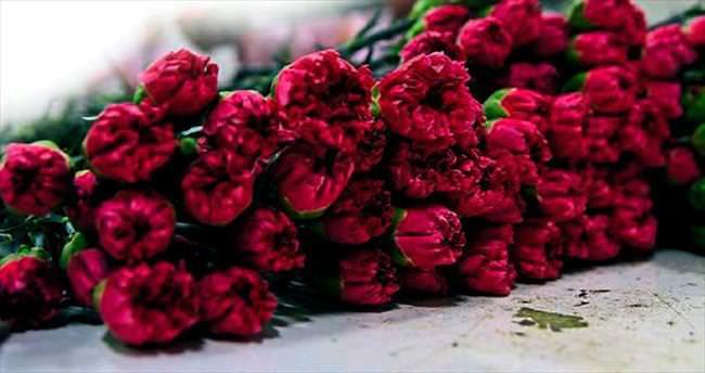 Kesme çiçekçiler yılbaşını bekliyor