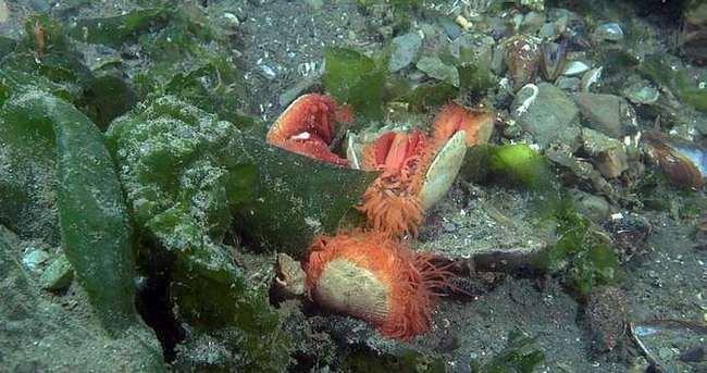 İzmit Körfezi'nde korkutan balık ölümleri
