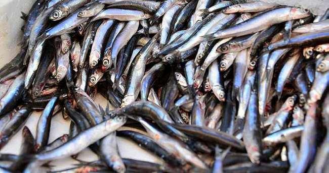 İstanbul'da balık fiyatları