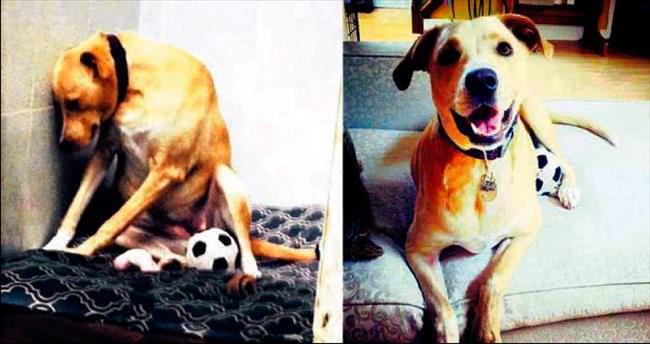 Dünyanın en üzgün köpeği artık mutlu