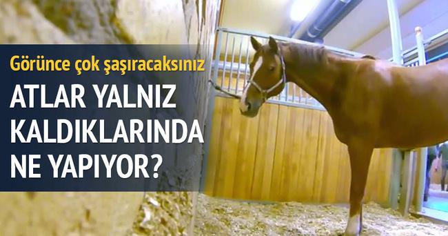 Atın yalnız kalınca yaptığına inanamayacaksınız